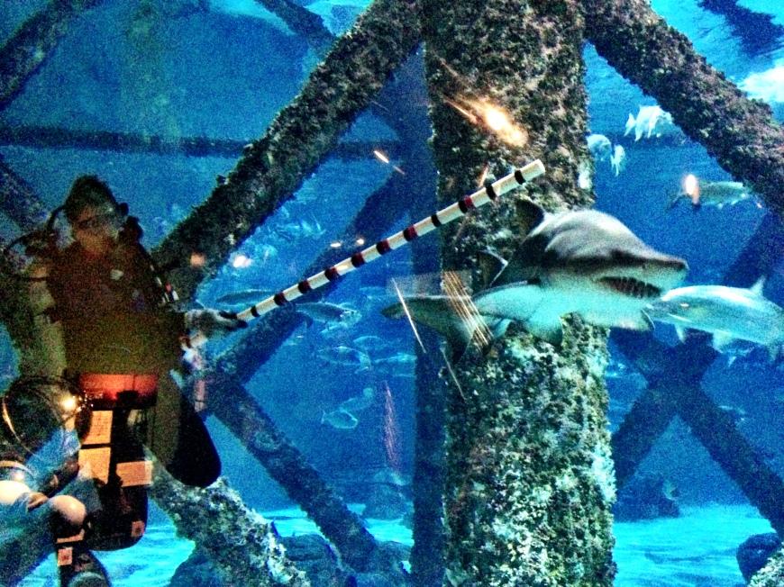 Shark tamers?
