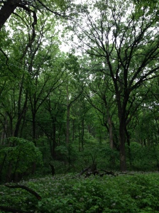 This is Ponca State Park
